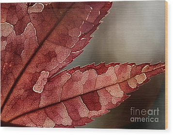 Wood Print featuring the photograph Leaf Detail by Kenny Glotfelty