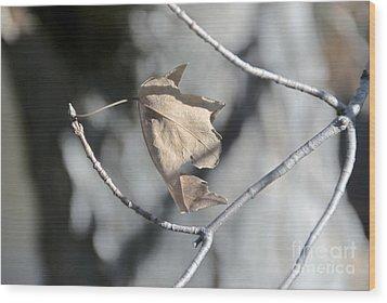 Leaf Harp Wood Print by Ted Guhl