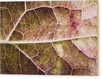 Leaf Lines Wood Print by Christine Smart