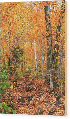 Wood Print featuring the photograph Leaf Littered Path by Alicia Knust