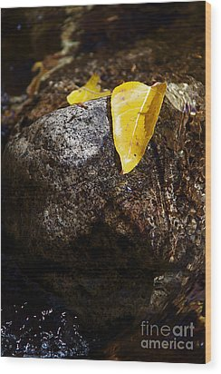 Leaf On Rock Wood Print by ELITE IMAGE photography By Chad McDermott