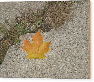 Leaf On Sidewalk Wood Print by David Fiske