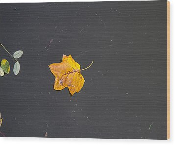 Leaf On Water Study  Wood Print by Tim Fitzwater