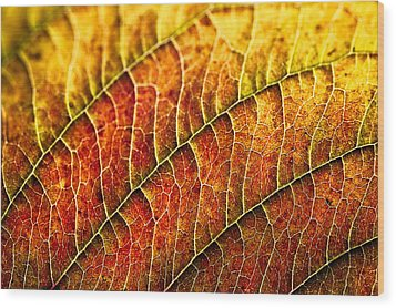 Leaf Rainbow Wood Print by Crystal Hoeveler