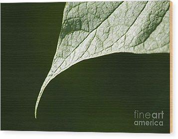 Leaf Wood Print by Tony Cordoza
