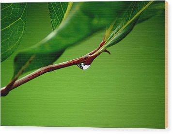 Leafdrop Wood Print
