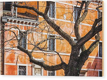 Leafless Tree In Venice Wood Print