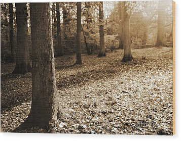Leafy Autumn Woodland In Sepia Wood Print by Natalie Kinnear