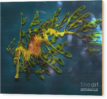 Leafy Sea Dragon Wood Print by Artist and Photographer Laura Wrede