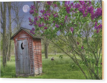 Leaning Outhouse Wood Print by David Simons