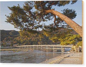 Leaning Pine Tree Arashiyama Kyoto Japan Wood Print