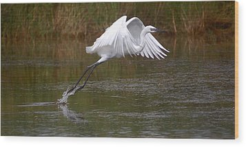 Leaping Egret Wood Print by Leticia Latocki