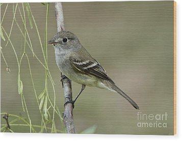 Least Flycatcher Wood Print by Anthony Mercieca