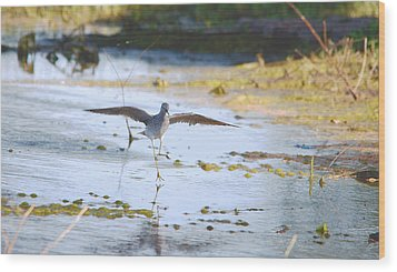 Least Sandpiper Water Landing Wood Print
