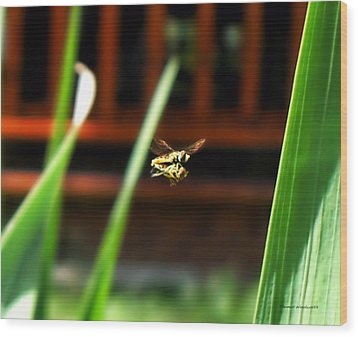 Wood Print featuring the photograph Leave No Bee Behind by Thomas Woolworth