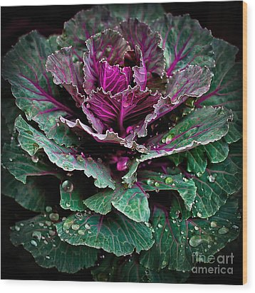 Decorative Cabbage After Rain Photograph Wood Print by Walt Foegelle