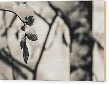 Leaves And Snow Wood Print by Andreas Levi