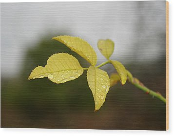 Leaves Wood Print by Cora Brum