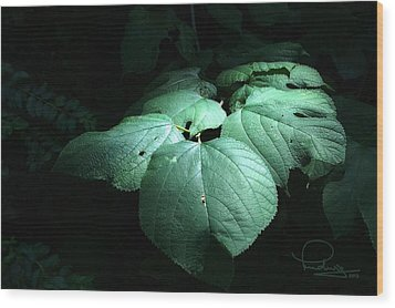 Wood Print featuring the photograph Leaves In A Patch Of Sunlight by Ludwig Keck