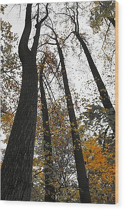 Wood Print featuring the photograph Leaves Lost by Photographic Arts And Design Studio
