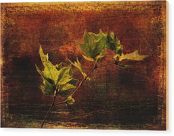 Leaves On Texture Wood Print