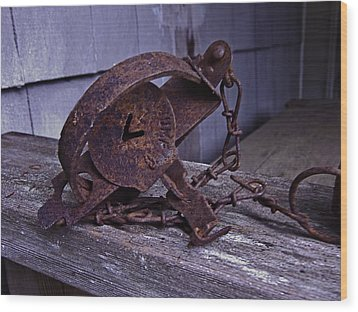 Leg Hold Trap  Wood Print by Rob Mclean