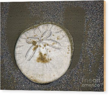 Legend Of The Sand Dollar Wood Print by Beverly Guilliams