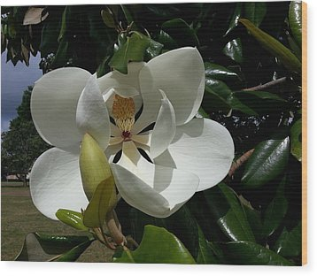 Lemon Magnolia Wood Print