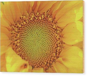 Lemon Wood Print by Tom Druin