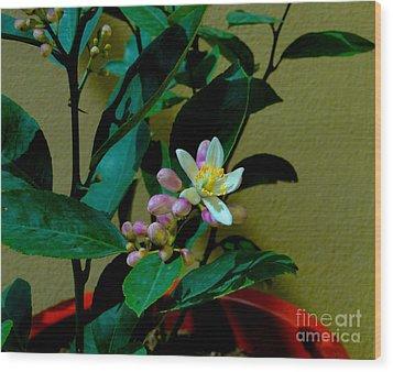 Lemon Tree Flower Wood Print by Al Bourassa