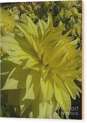 Lemon Yellow Dahlia  Wood Print by Susan Garren