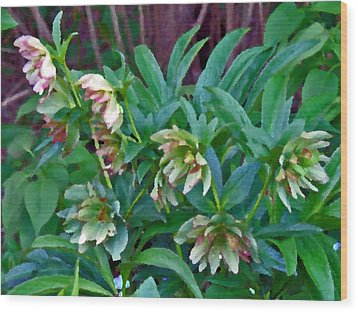 Lenten Roses Wood Print by Jean Hall