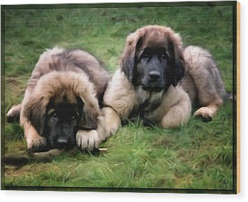 Leonberger Puppies Wood Print by Gun Legler