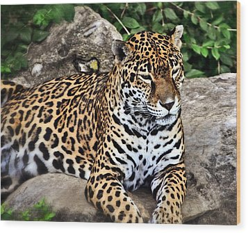 Leopard At Rest Wood Print by Marty Koch
