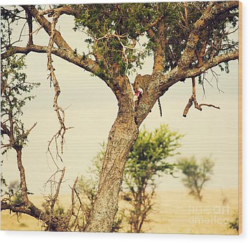 Leopard Eating His Victim On A Tree In Tanzania Wood Print by Michal Bednarek