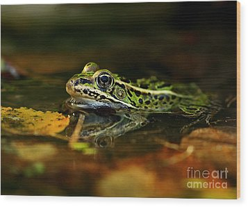 Leopard Frog Floating On Autumn Leaves Wood Print by Inspired Nature Photography Fine Art Photography