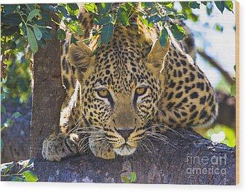 Leopard In Tree Wood Print