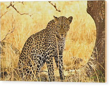 Leopard Wood Print by Kongsak Sumano
