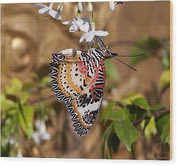 Wood Print featuring the photograph Leopard Lacewing Butterfly Dthu619 by Gerry Gantt