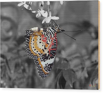 Wood Print featuring the photograph Leopard Lacewing Butterfly Dthu619bw by Gerry Gantt