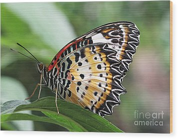Leopard Lacewing Butterfly Wood Print by Judy Whitton