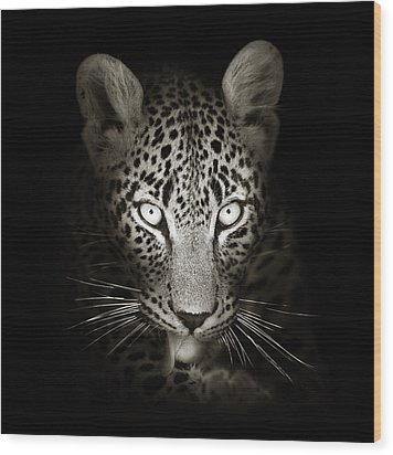 Leopard Portrait In The Dark Wood Print by Johan Swanepoel