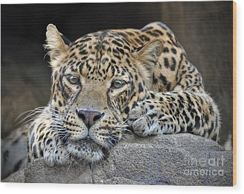 Wood Print featuring the photograph Leopard by Savannah Gibbs