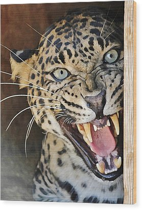 Leopard Snarling Wood Print by Diane Alexander