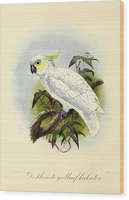 Lesser Cockatoo Wood Print by Anton Oreshkin