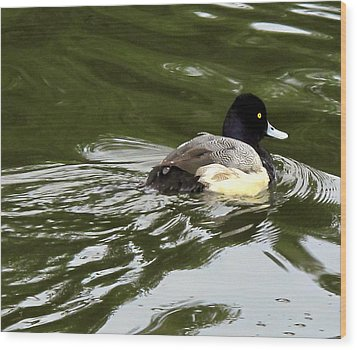 Wood Print featuring the photograph Lesser Scaup by Suzy Piatt