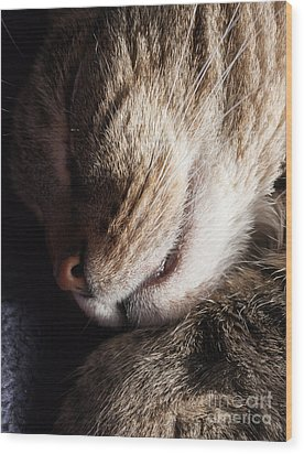 Let Sleeping Cats Lie Wood Print