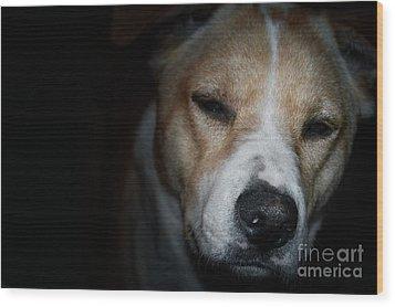 Let Sleeping Dogs Lie. Wood Print by Tim Kravel