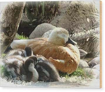 Let Sleeping Ducks Lie Wood Print