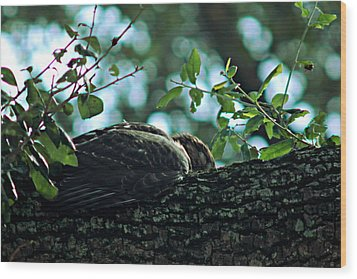 Let Sleeping Hawks Lie Wood Print by Greg Allore